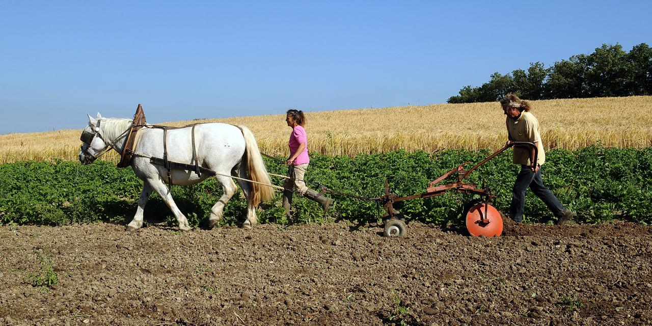 Agriculteurs qui bossent comme des trimards